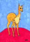 The Vicuna