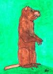 The Woodchuck